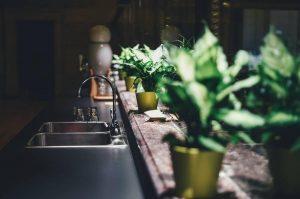 Plantes d'intérieur : comment les choisir ?