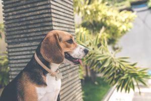 Découvrez ces astuces efficaces pour traiter les problèmes de peau de votre chien