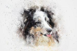 Comment dessiner un chien facilement ?