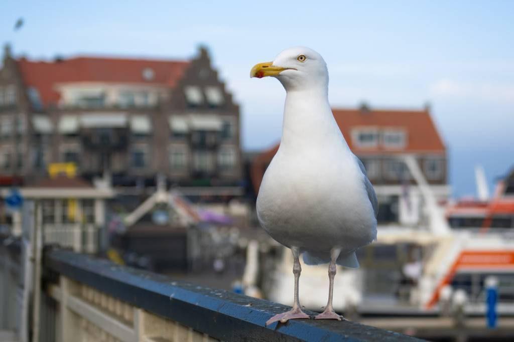 Comment éloigner les pigeons et les oiseaux de son baclon ? Solutions