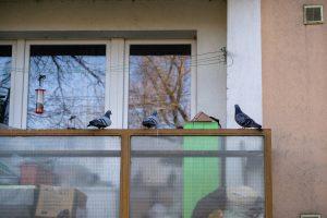 Comment éloigner les oiseaux efficacement de son balcon ?