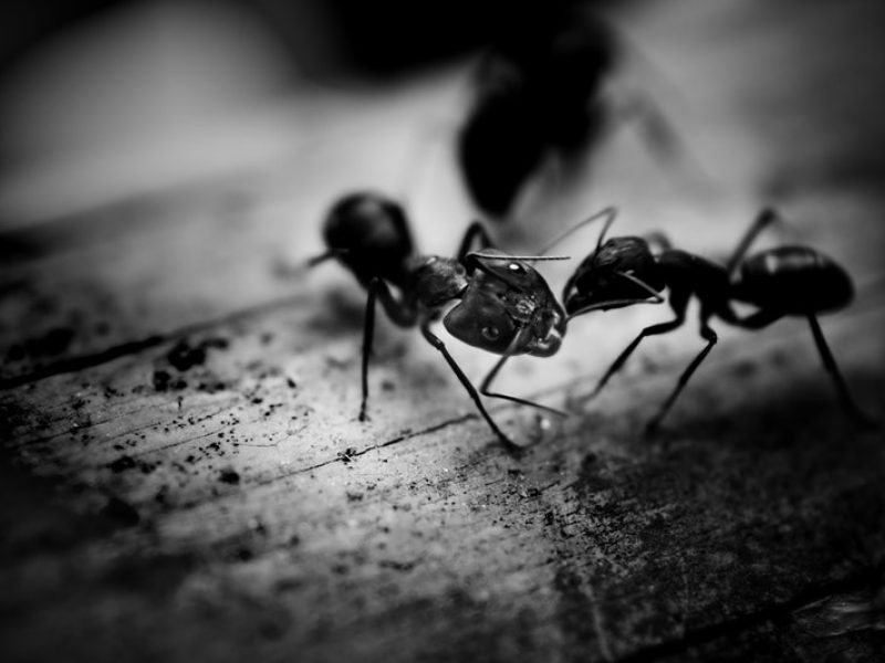 Voici des astuces naturelles pour vous débarrasser des fourmis