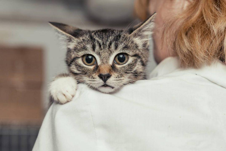 Quelles solutions pour apaiser un chat stressé ?