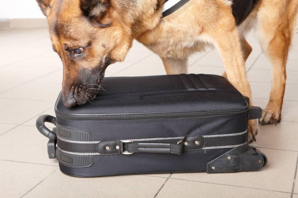 Les opérations de sécurité des aéroports