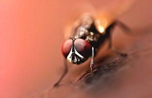 Comment éloigner les mouches avec des produits naturels?