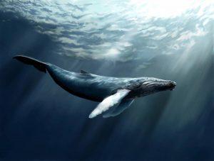 Les plus grands animaux du monde