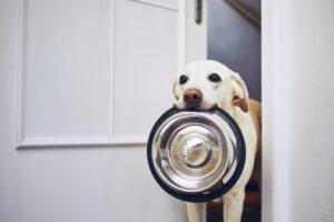 Une alimentation appropriée pour un chien heureux et en bonne santé